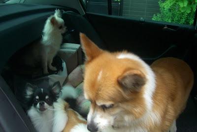 那須の別荘に犬全部