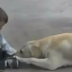 Dog Showing Love While Interacting To a Beautiful  Boy with Down Syndrome