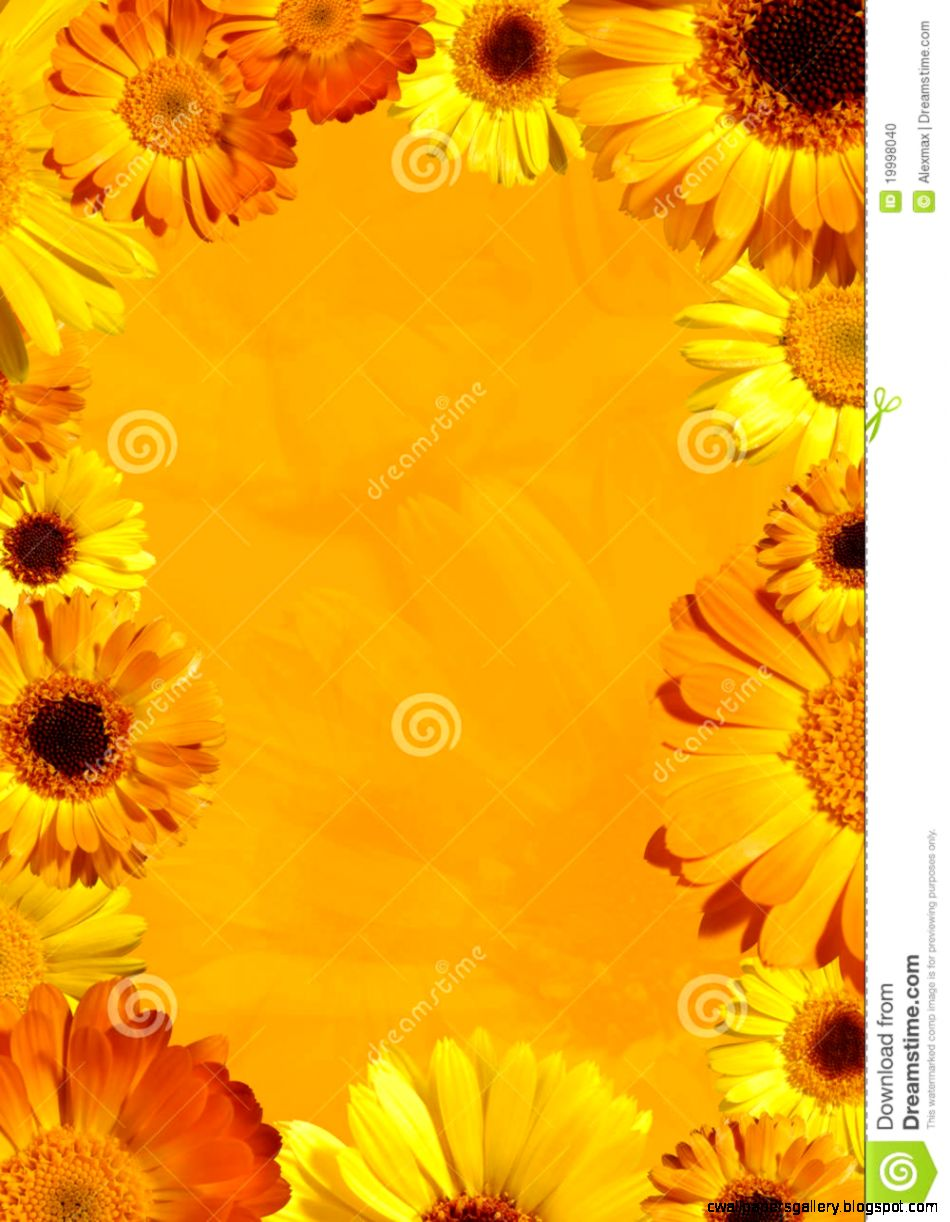 Wild Orange Flower Background Stock Photo   Image 19998040