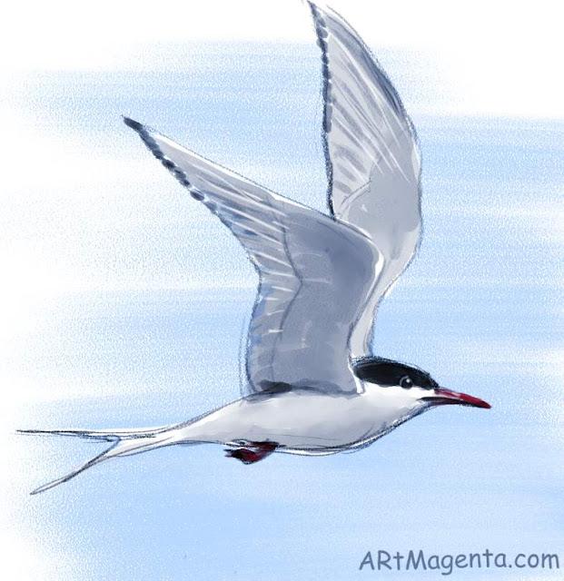 Silvertärna är en fågelmålning av Artmagenta