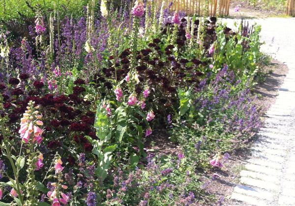 Rabatt i purpur, lila och rosa.