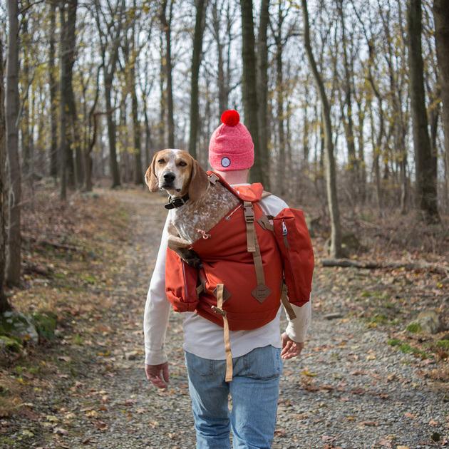 Fotógrafo leva seu cão resgatado Maddie por uma épica aventura pelos EUA