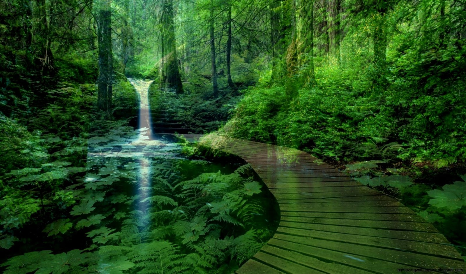 forest landscape wallpaper amazing wallpapers