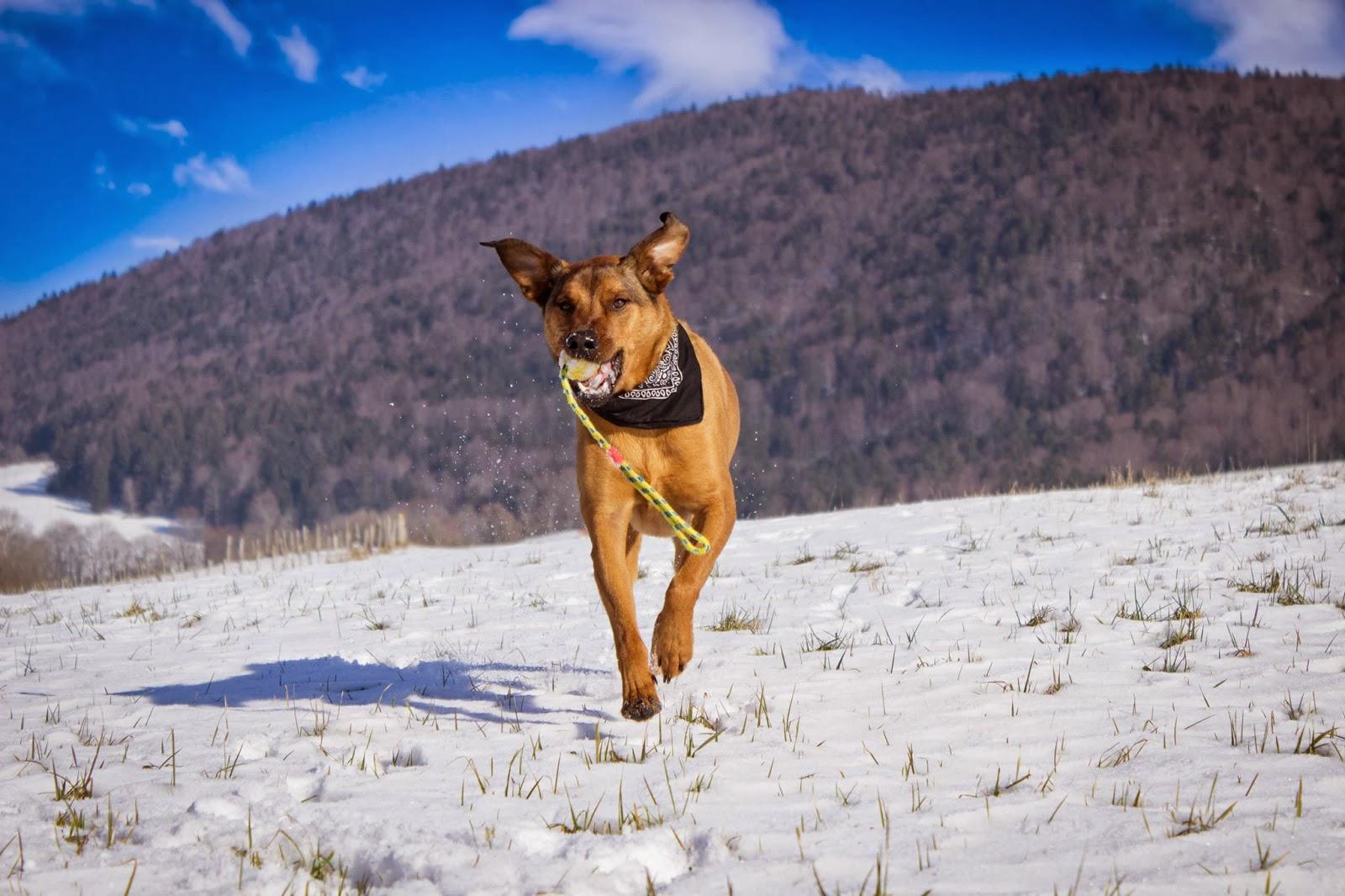 Snow running dog