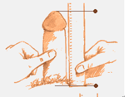 this photo shows the proper way to measure your penile length