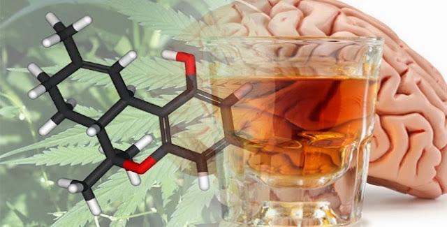 Scientists Discover That Cannabis May Reduce Brain Damage Caused By Alcohol