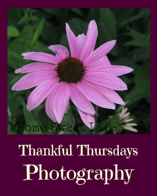 Thankfulness, photography