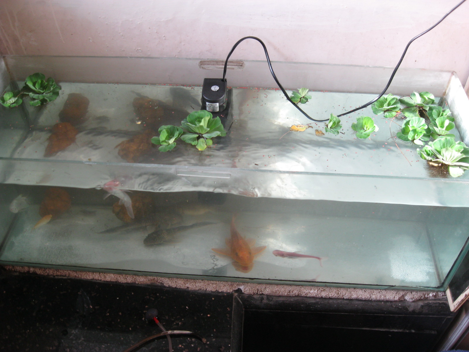 Fish tank maintenance in mumbai experiments with aqua for Fish tank cleaning service