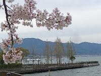 由美浜の桜と比叡の山々