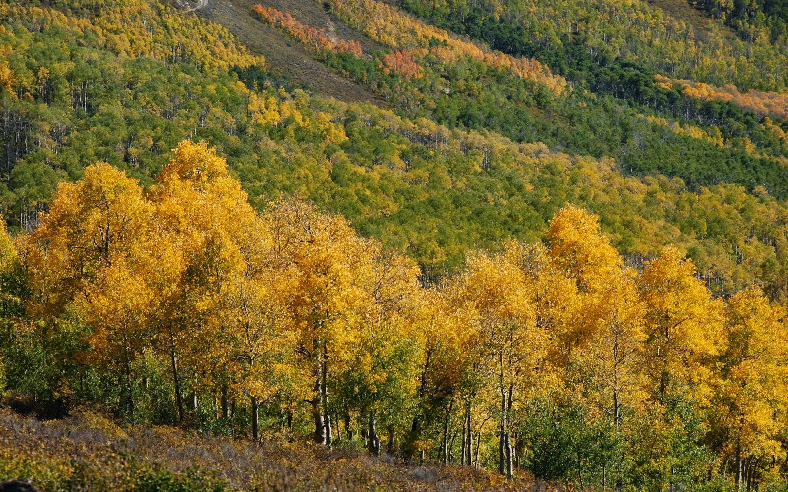 utah, fall colors, empire pass, alpine loop