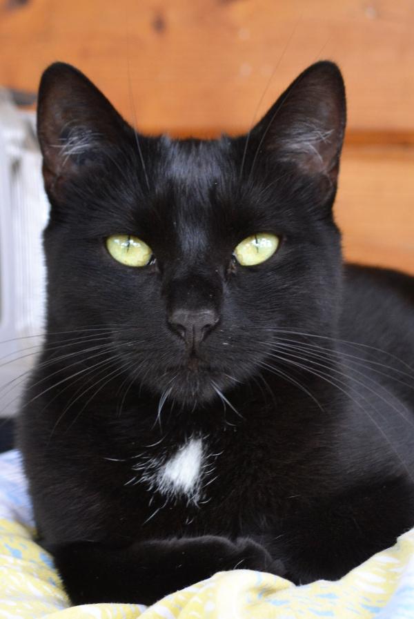 Cela peut paraître assez incroyable, mais de nos jours, les chats noirs sont encore les victimes des superstitions. Un chat noir qui se retrouve dans un