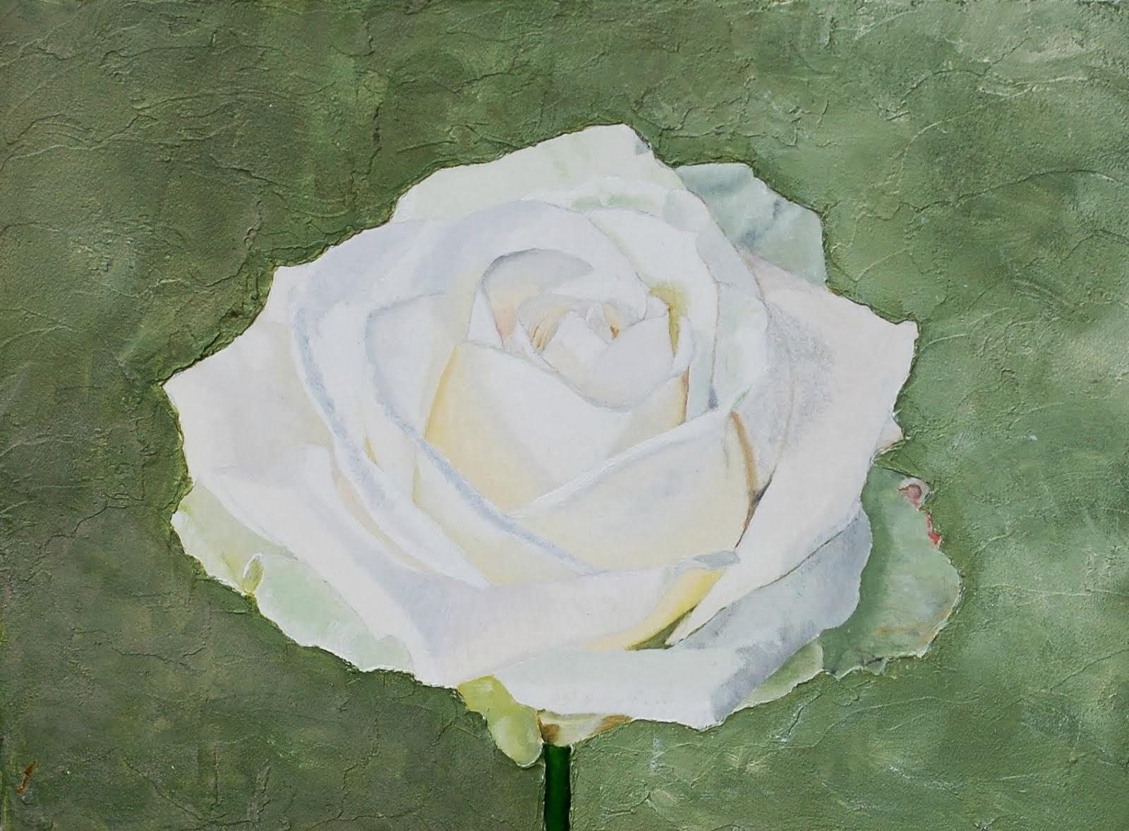 Lees het Manifest van de Witte Roos