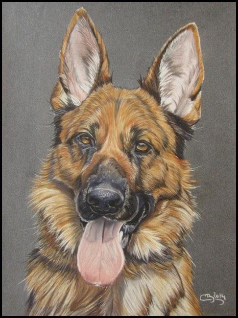portrait berger allemand