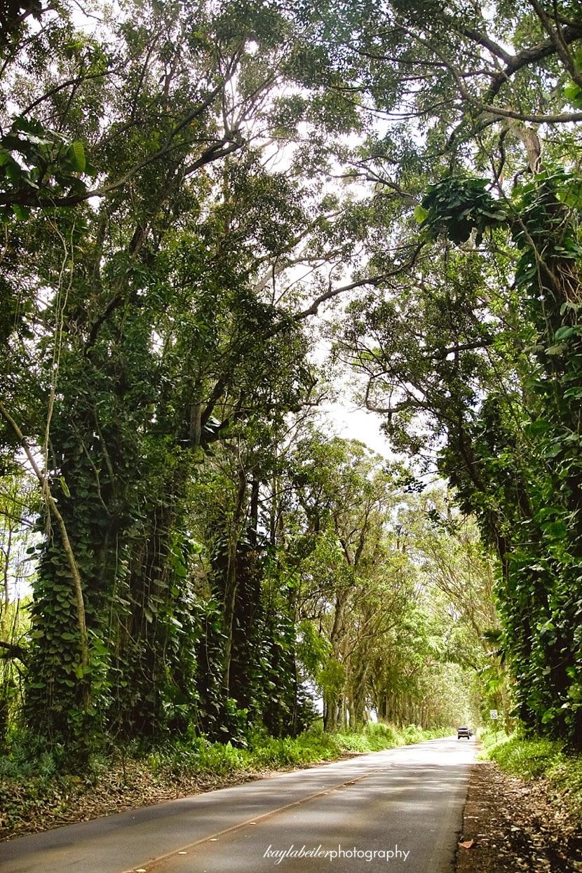 most beautiful road in kauai photo