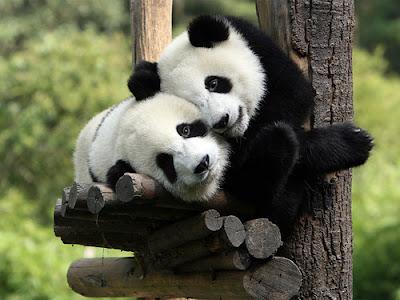 Hình ảnh ngộ nghĩnh động vật yêu nhau
