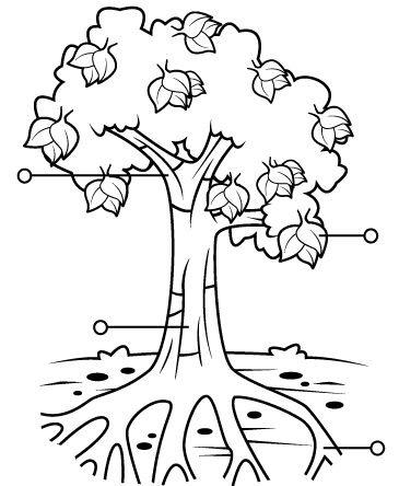 Segundo ciclo ceip 28 de febrero las plantas for Imagenes de las partes del arbol