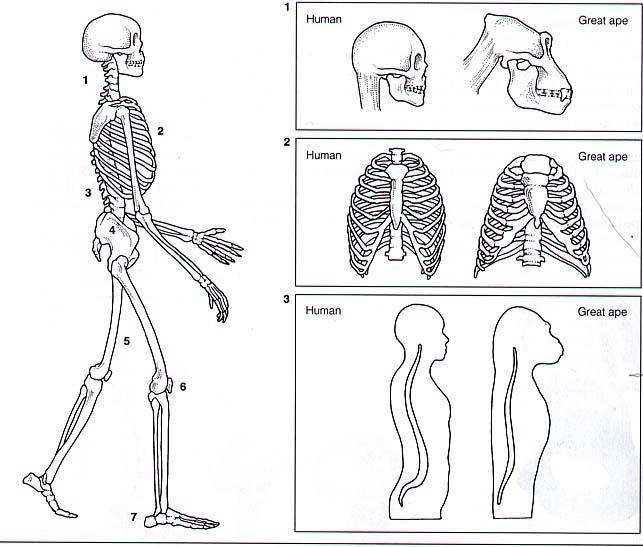Gravidanza e varicosity di corpi di una piccola pelvi