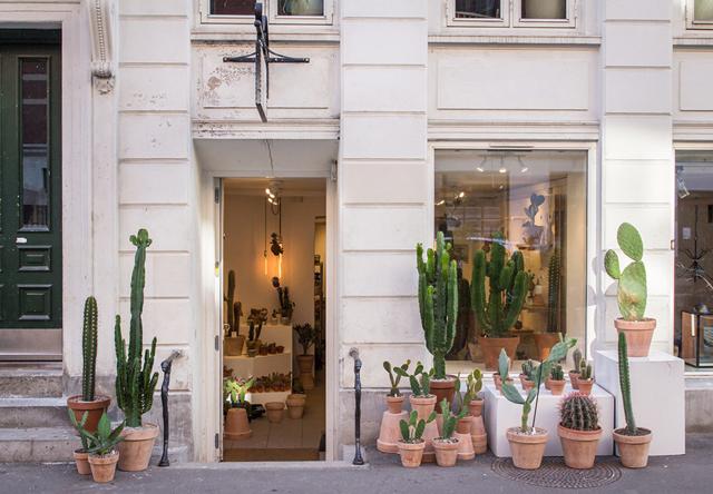 Cactus y suculentas de estilo nórdico minimalista