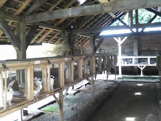 alamat peternak kelinci di banyuwangi