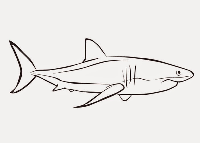 Great White Shark Coloring Pages Great White Shark Coloring Page