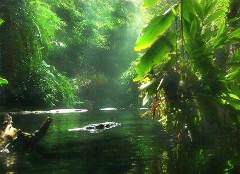 Αμαζόνιος: Ο πνεύμονας της Γης με τα 390 δισεκατομμύρια δέντρα από 16.000 είδη