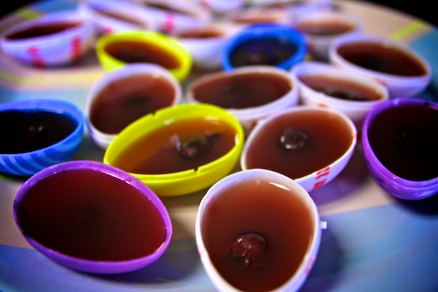 Easter egg jello, Homemade jello, dye free jello