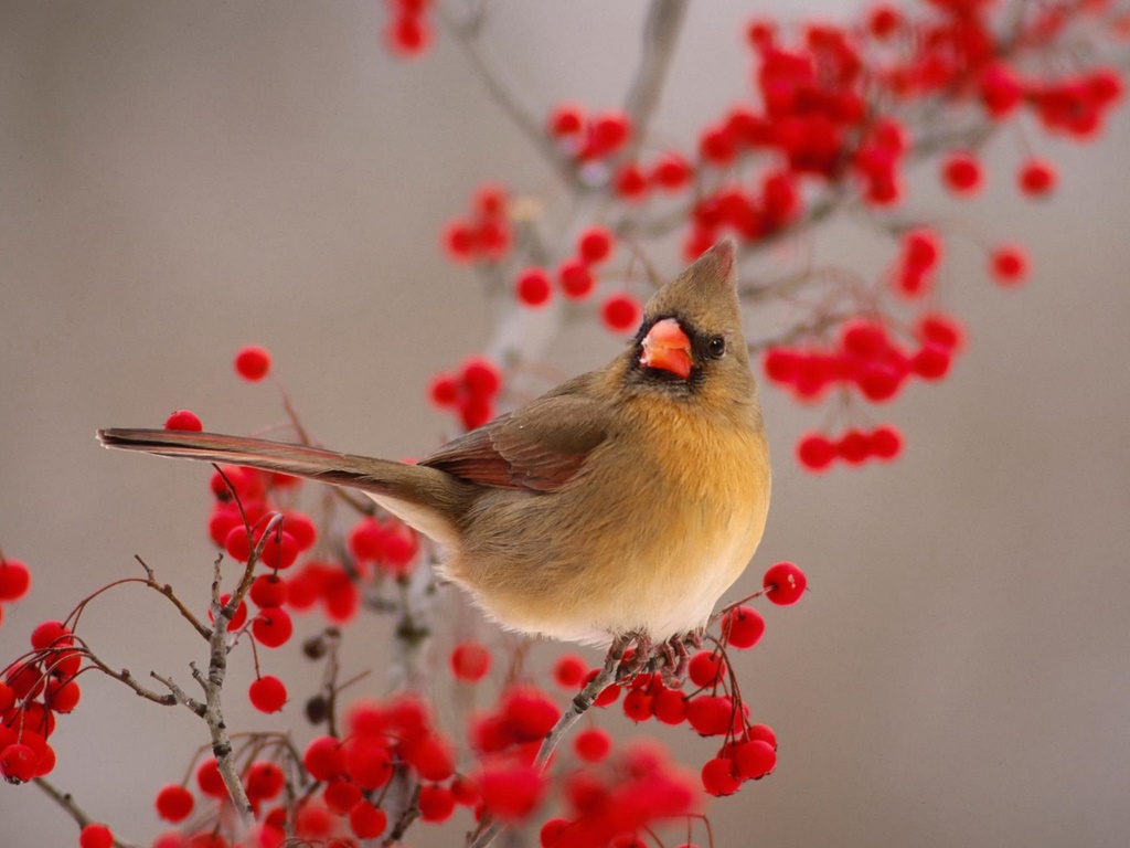 Entertainment Only: Lovely Small Birds Wallpapers