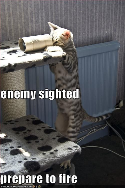 Funny Cat Pic Clean