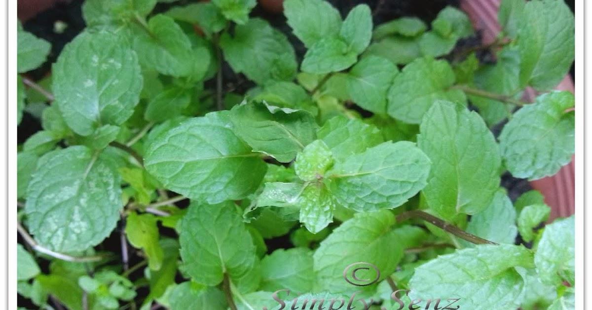 All Natural Remedies Brenham Tx