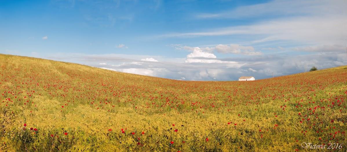 Fotografías en la Mancha