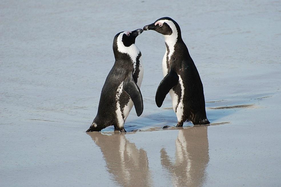 De pingüinos y hombres  RINCON DEL BIBLIOTECARIO