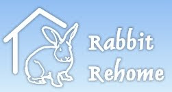 Rabbits Looking For Homes All Over The UK