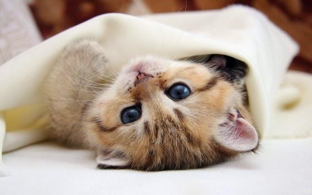 hình nền mèo con ngộ nghĩnh nhất