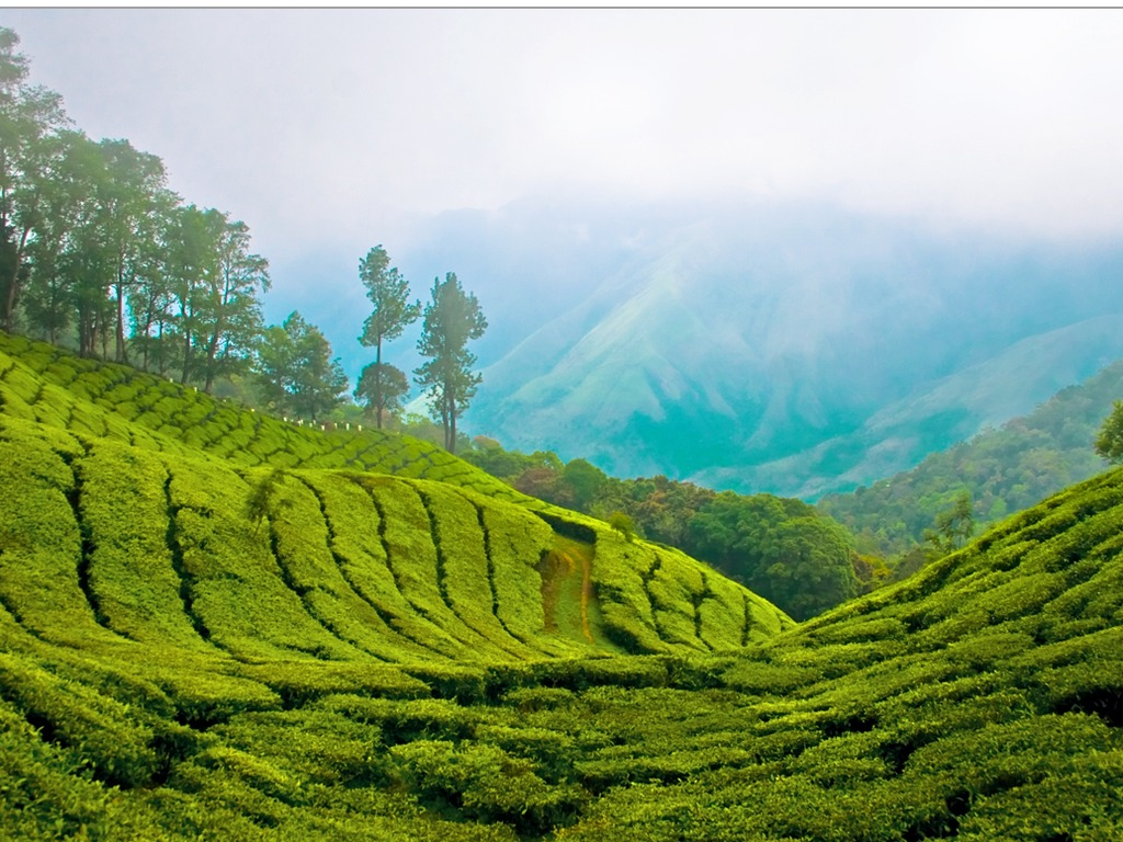 Kerala India Most Beautiful Places