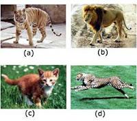 keanekaragaman hayati, keanekaragaman spesies