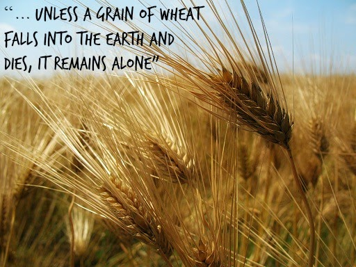 grain of wheat dies