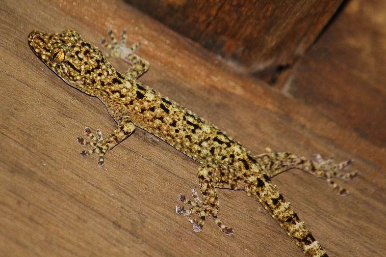 Pin Yellow Spotted Lizard Cartoon Image Search Results on ...