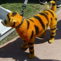 The elusive Tigger-Dog of Southern California stalks his prey