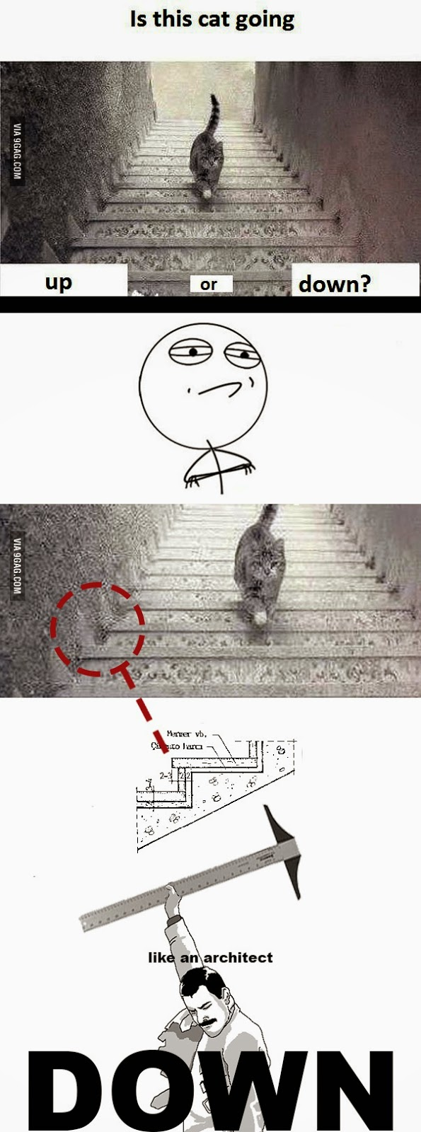 9gag is cat gong up stairs