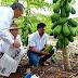 Papaya Maradol de Yucatán conquista mercados de Estados Unidos, Canadá y Europa
