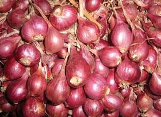 Cara Mengendalikan Hama Dan Penyakit Pada Tanaman Bawang Merah