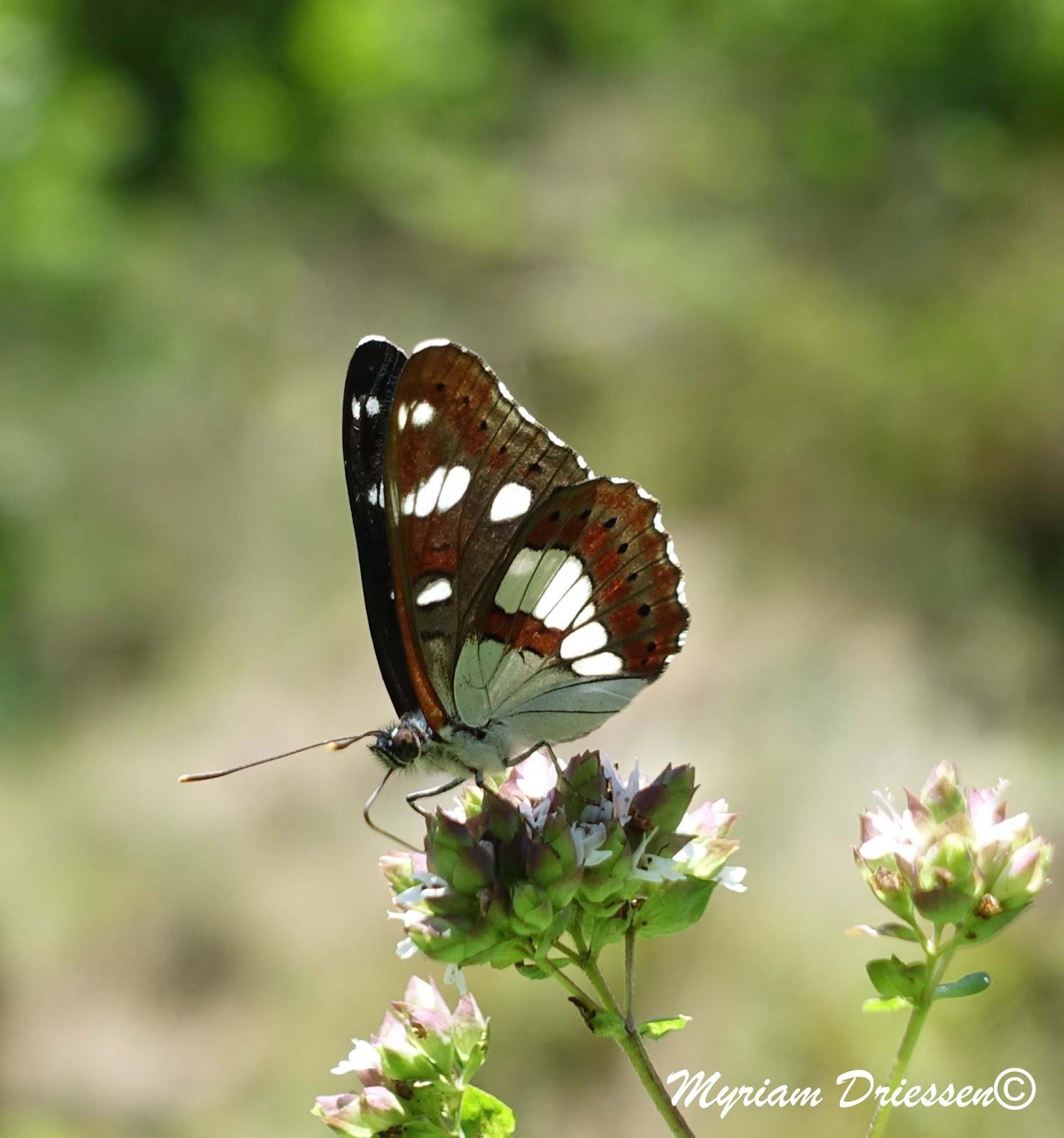 g te et d couvertes de la vall e du sant papillon petit sylvain. Black Bedroom Furniture Sets. Home Design Ideas