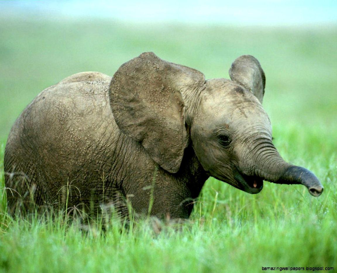 Cute wild baby animals - photo#18