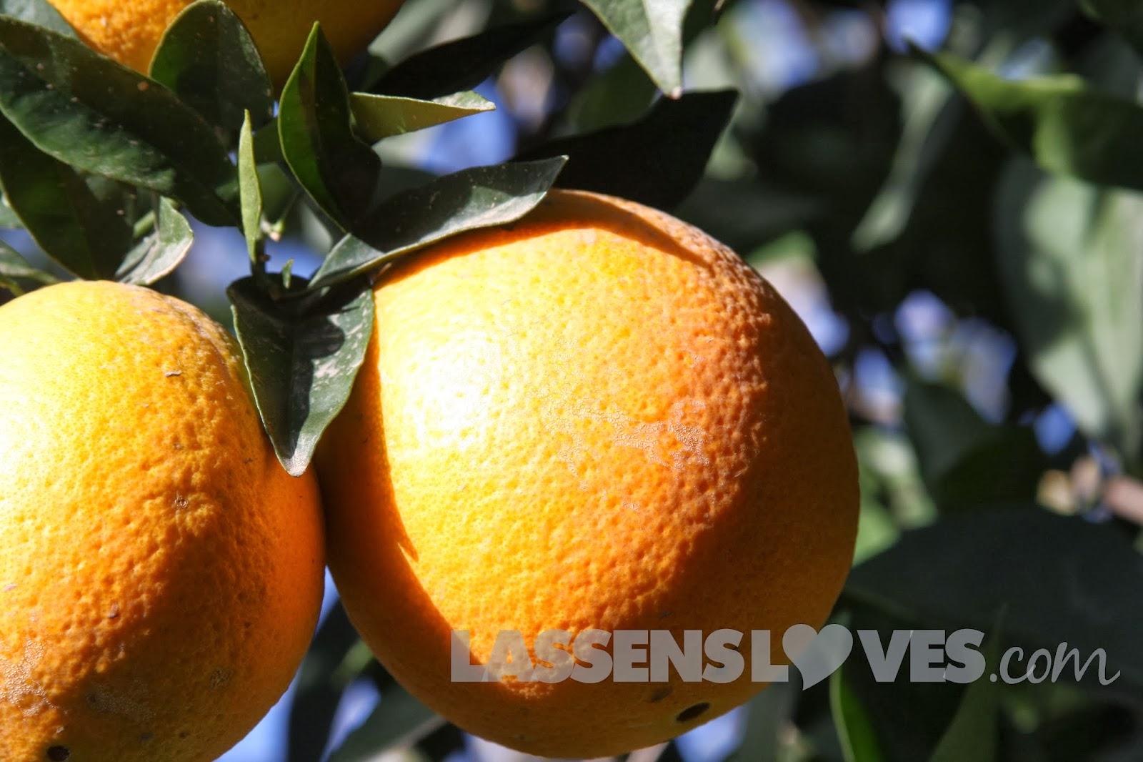buck+brands+citrus, buck+brands, organic+citrus