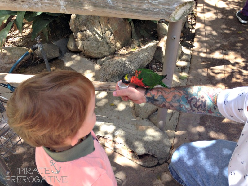 It's such a blast feeding the birds in Lorikeet Landing at the Safari Park.