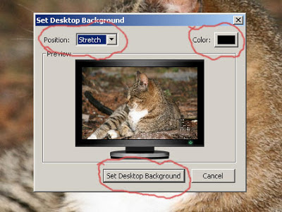 Free Cat Desktop Wallpaper - right click and select save as or choose from the links below