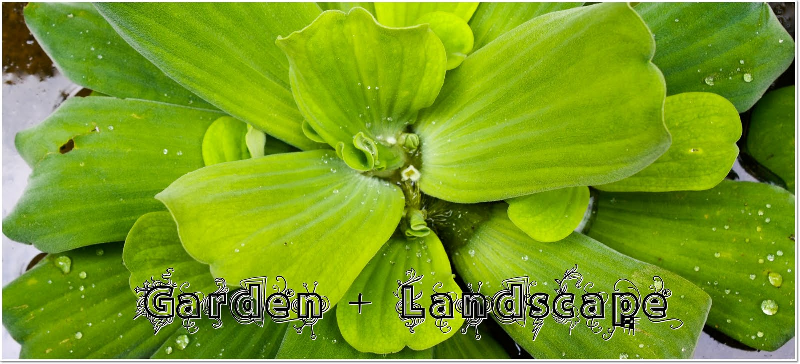Sulong & Brothers Garden Landscape