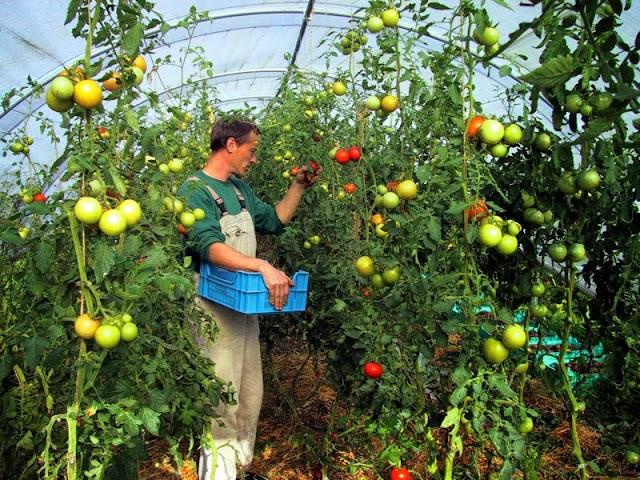 Χρυσές επιδοτήσεις για 40 εναλλακτικές καλλιέργειες