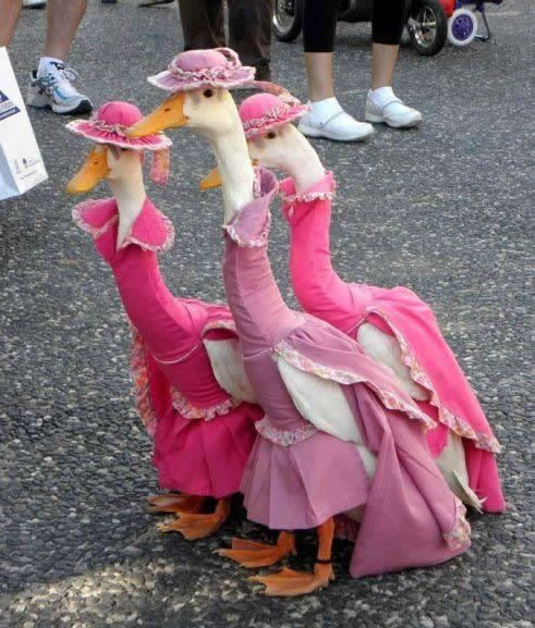 duck fashion show 2013