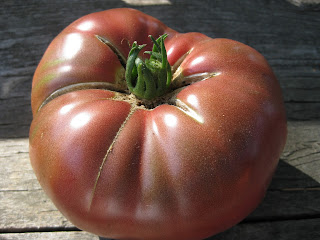 one beefsteak tomato in sunlight